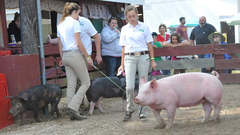 Hopkinton State Fair Swine Show